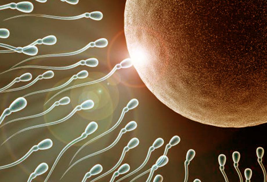 Gli ovociti attraggono e selezionano gli spermatozoi che li feconderanno